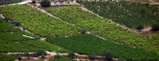 Nemea, Greece, Agiorgitiko – American Wine Writer – Benjamin Spencer